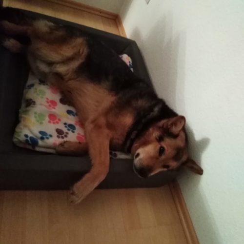 Schäferhunde-Fans… Wo seid ihr?