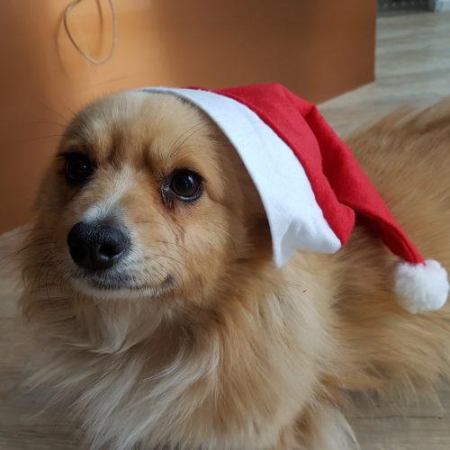 Tiere gehören nicht unter den Weihnachtsbaum