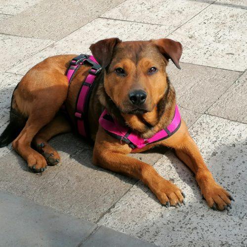 Direktadoption, … russisches Roulette für Hund und Adoptanten …