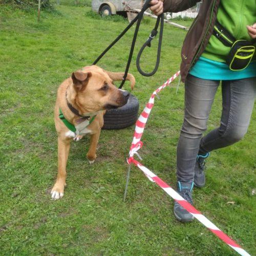 Hundeführerschein wird in Baden-Württemberg zur Pflicht …